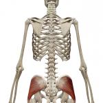 中臀筋:ちゅうでんきん