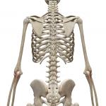 肘筋:ちゅうきん