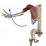 肩の屈曲(腕を前から上げる動き)