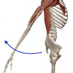 肩の伸展(腕を後ろへ上げる動き)