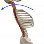 脊椎の伸展(背骨を反らす動き)