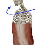脊椎の回旋(背骨を回す動き)