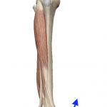足首の内反(足を内へひねる動き)