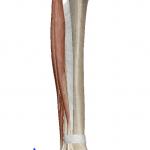 足首の外反(足を外へひねる動き)
