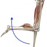 膝の屈曲(膝を曲げる動き)