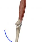 膝の伸展(膝を伸ばす動き)