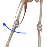 股関節の外転(足を外へ開く動き)