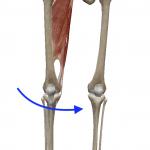 股関節の内転(足を内へ寄せる動き)