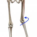 股関節の内旋(足を内へ回す動き)