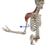 肩の外旋(腕を外向きに回す動き)