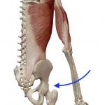 肩の内転(腕を背骨へ近づける動き)