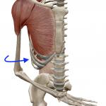 肩の内旋(腕を内向きに回す動き)